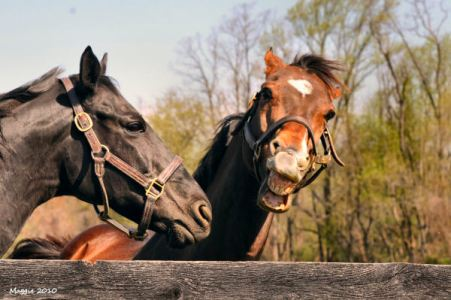 Blackie_and_Spinaway_D308071