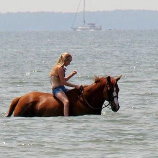 Royal Guard in water