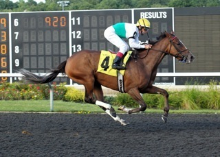 Cats Holiday Stakes