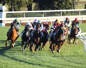 MISS TEMPLE CITY The Shadwell Turf Mile Gr I - 31st Running Keeneland Race Course     Lexington, Kentucky October 8, 2016    Race #09 Purse $1,000,000 One Mile-Turf  1:37.04 The Club Racing, LLC, Allen Rosenblum & Sagamore Farm, Owner H. Graham Motion, Trainer Edgar Prado, Jockey Ironicus (2nd) Tourist (3rd) $17.40 $8.20 $5.40 Order of Finish - 7, 8, 10, 4 Please Give Photo Credit To:  / Coady Photography