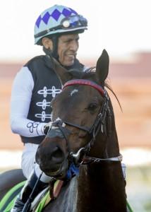 Miss Temple City and jockey Edgar Prado win the Grade I $300,000 Matriarch Stakes Sunday, December 4, 2016 at the Del Mar Thoroughbred Club, Del Mar, CA. ©Benoit Photo