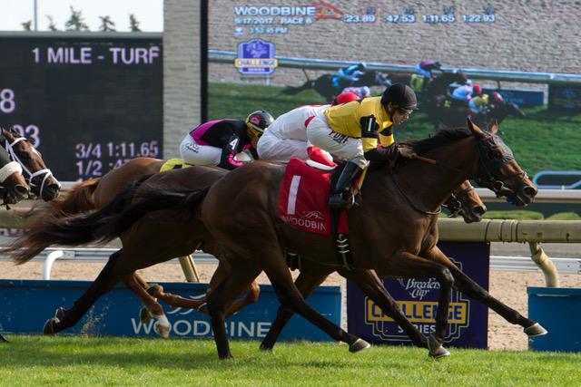 Untamed Domain wins the Summer Stakes (GII)