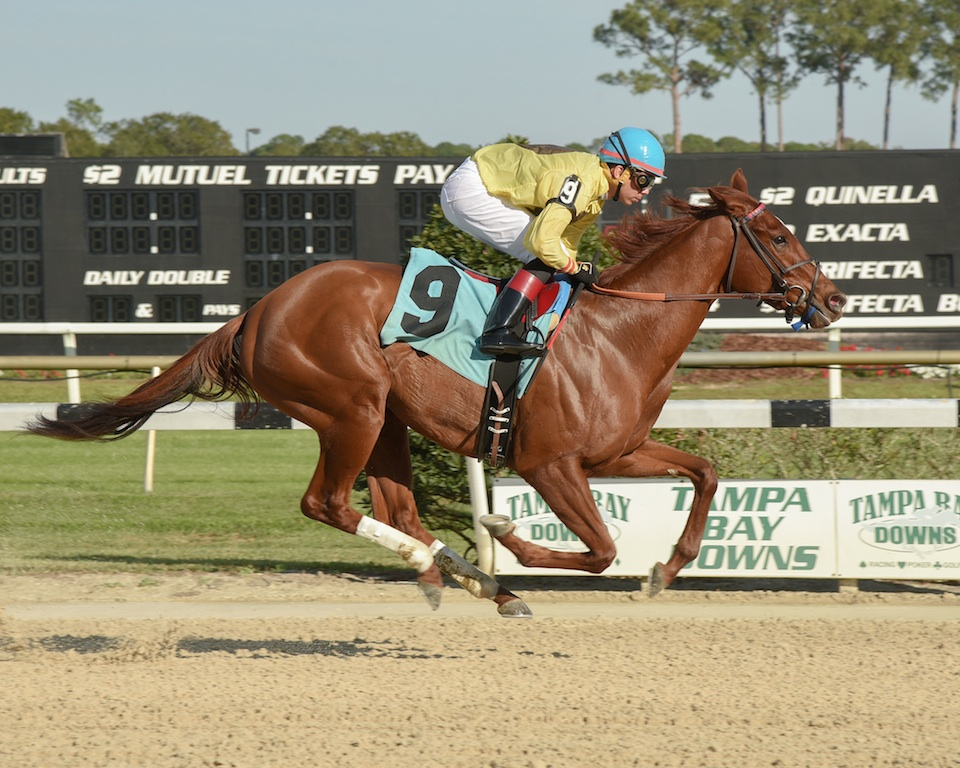 Almond Roca Wins The Sandpiper Stakes