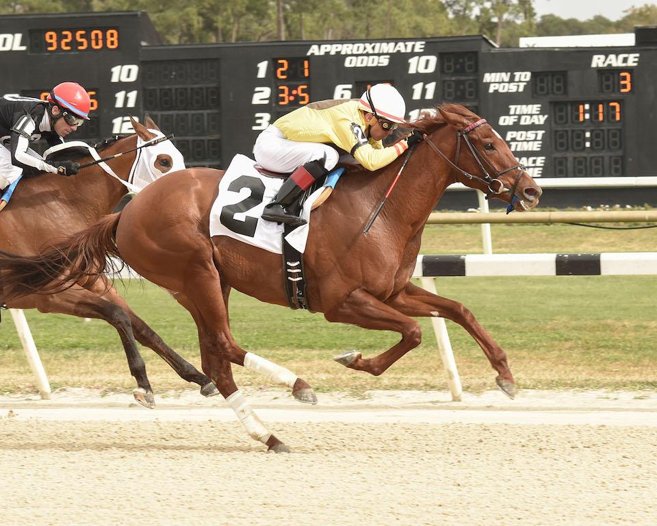 Almond Roca Wins The Gasparilla Stakes